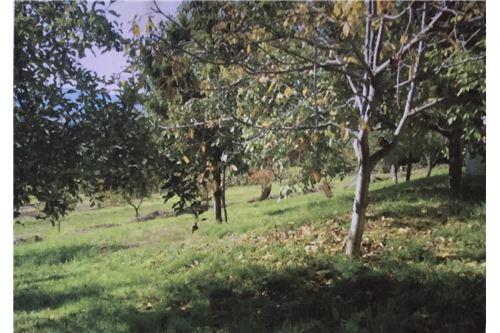 Grundstück mit Obstbäumen